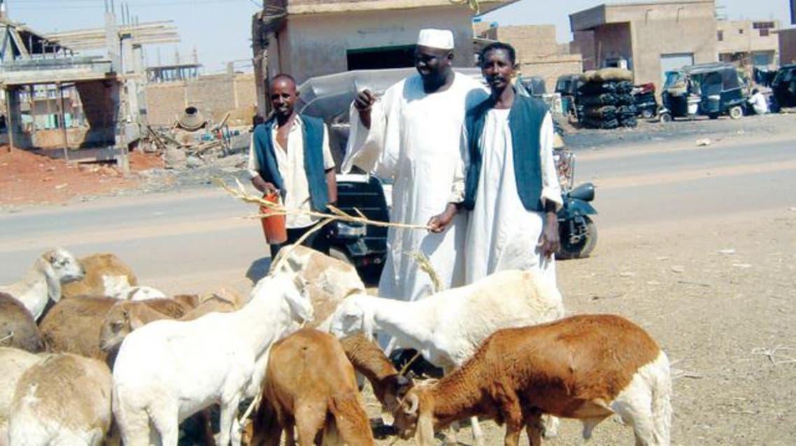 الاضاحي في السودان