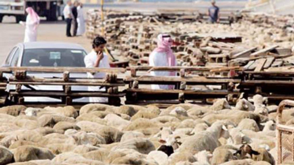 خراف الاضاحي في السعودية