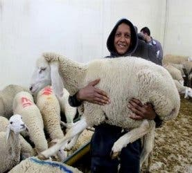 ALGERIA: Muslims worldwide traditionally slaughter a sheep on Eid al-Adha. (Al Arabiya)