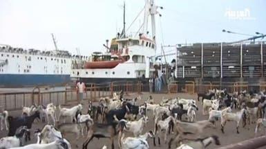 أكثر من 3 ملايين رأس ماشية وصلت إلى جدة قبل عيد الأضحى