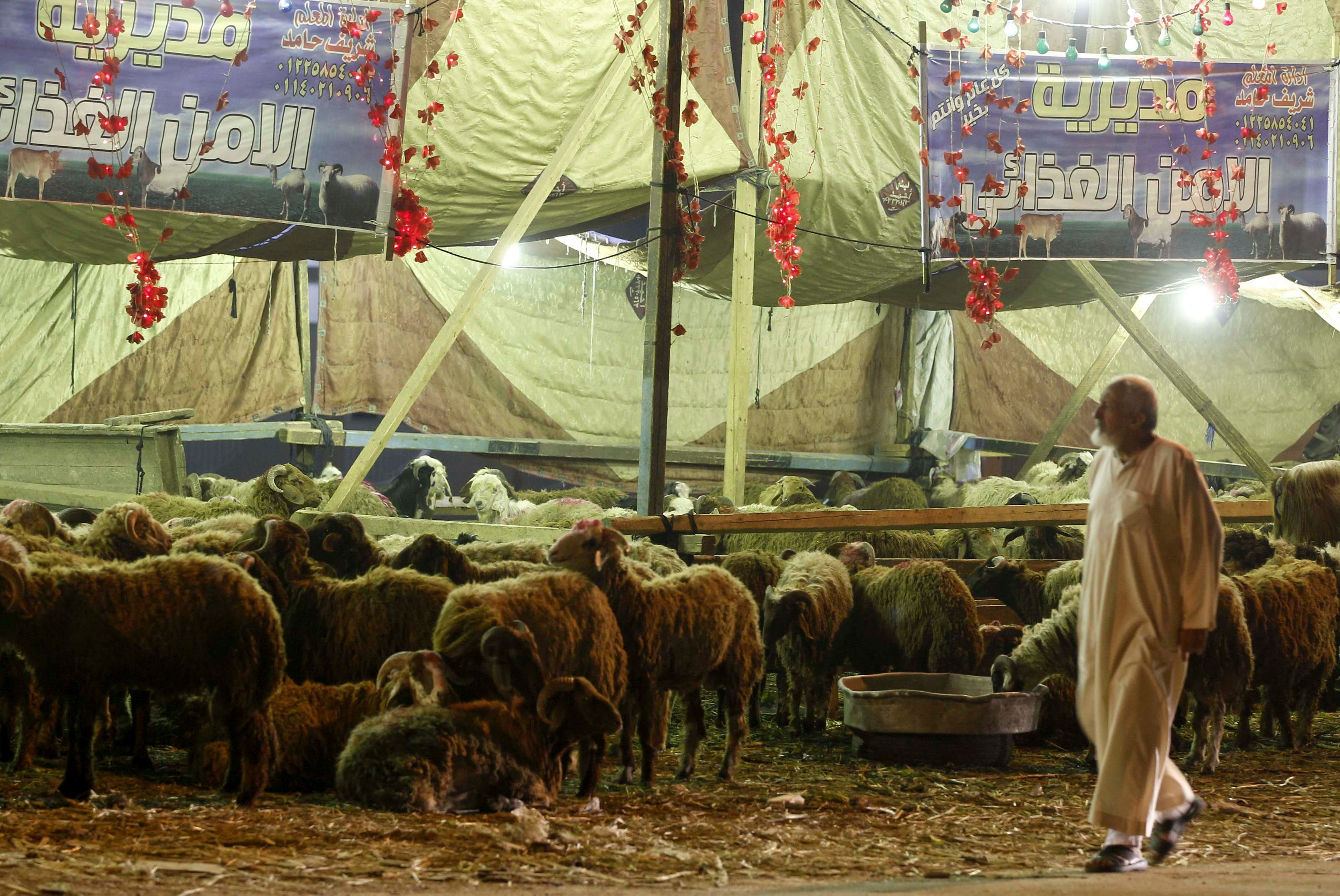 EGYPT: A man walks walks past sheep, ahead of Eid al-Adha, at a market in Cairo October 14, 2013. (Reuters)