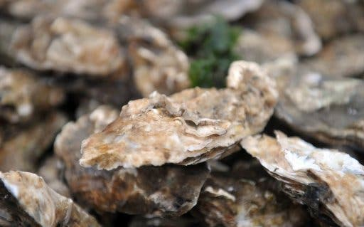 oysters afp