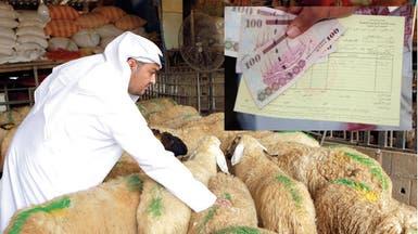 1.8 مليون رأس ماشية لتغطية الحج والسوق المحلية بالسعودية