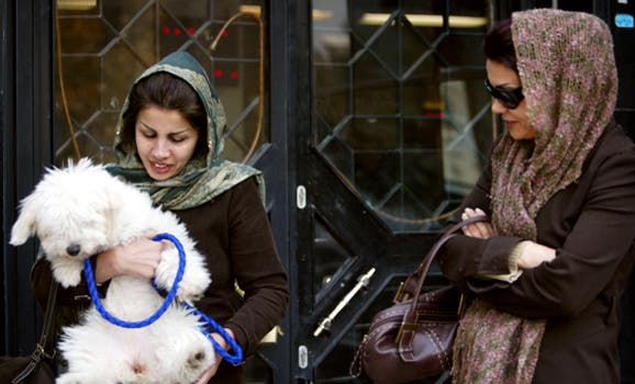 iran dogs reuters