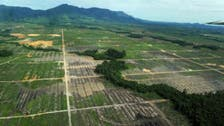 Indonesia forests still dwindle despite reforms