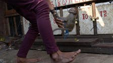 Indonesian capital swings in to rescue performing monkeys