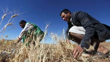 New Iraq Grain Board chief appointed after spoiled rice scandal