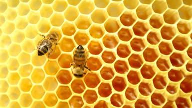 العسل الطبيعي.. يعزز طاقة الجسم ويقوي مناعته