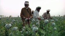 """ازدهار زراعة """"الأفيون"""" بأفغانستان مع انسحاب الأميركيين"""