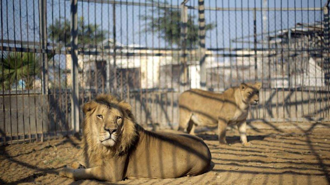 Gaza's animal kingdom