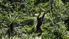 Chimps are people, too? U.S. courts to test that question