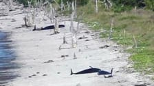 """حيتان تعود إلى المياه بعد جنوح """"انتحاري"""" في فلوريدا"""