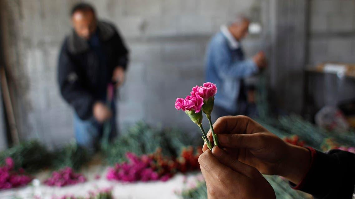 Flower harvest in Gaza