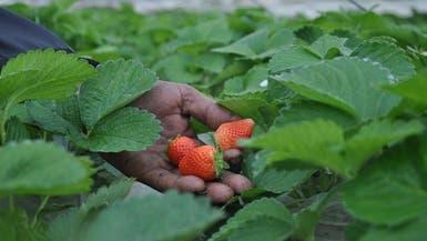 السودان تنضم للدول التي تقاطع المنتجات الزراعية لمصر