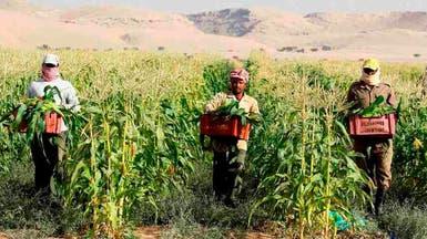 وزارة العمل تبحث شروطاً جديدة لجلب حراس ومزارعين