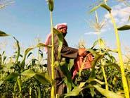 السعودية تتجه لإطلاق شركة حكومية للخدمات الزراعية