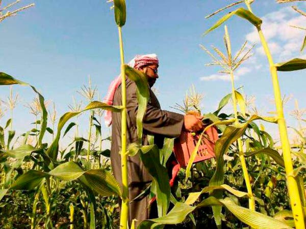 السعودية تعتمد قروضاً زراعية بـ 333 مليون ريال