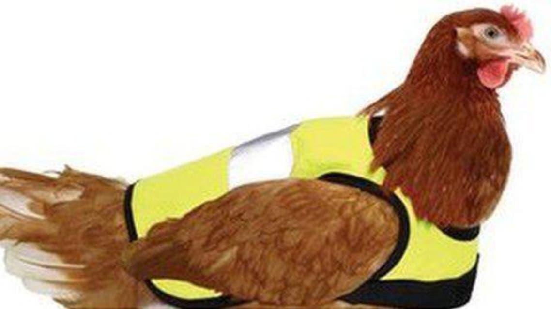 سترات متطورة لحماية الدجاج من البرد