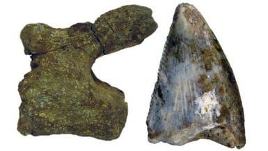 اكتشاف بقايا ديناصورات لأول مرة في السعودية