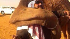 'Camels never forget!' Saudi man reunites with former companion