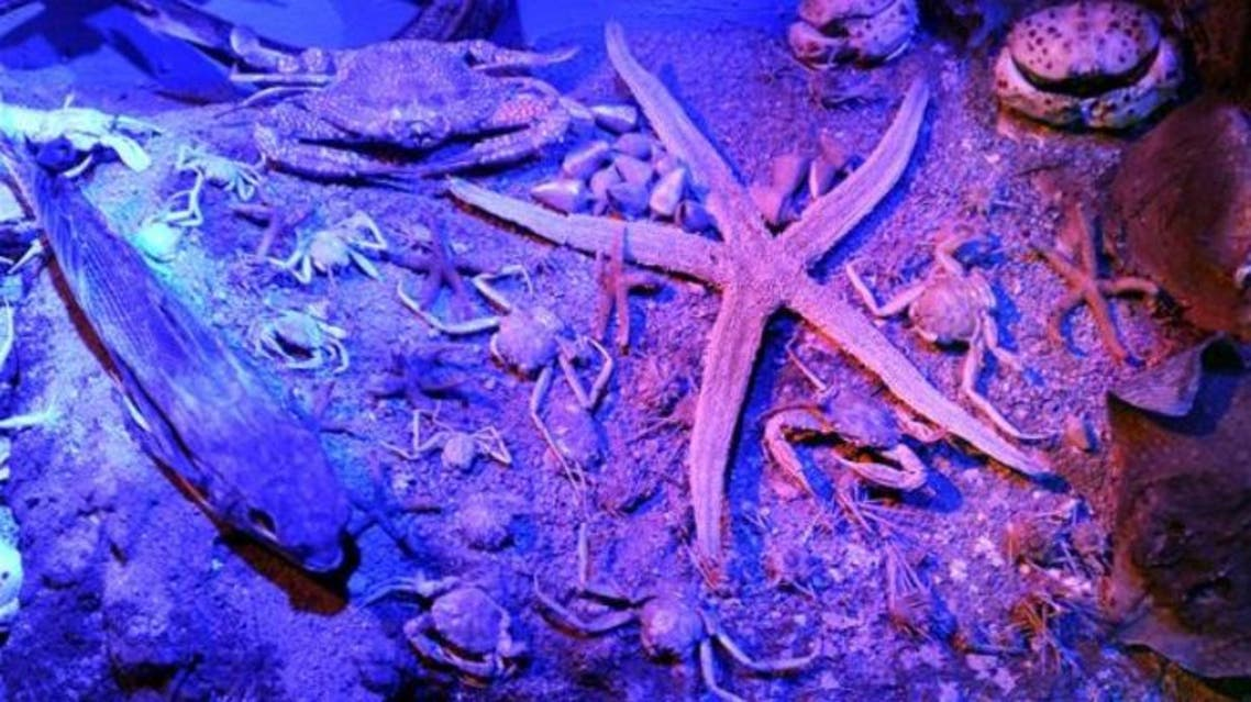 Marine animals such as bony fishes, shrimps, shellfishes and lobsters will be also be on display. (Courtesy: Hurriyet Daily News)