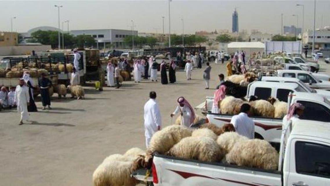 تاجر أغنام سعودي