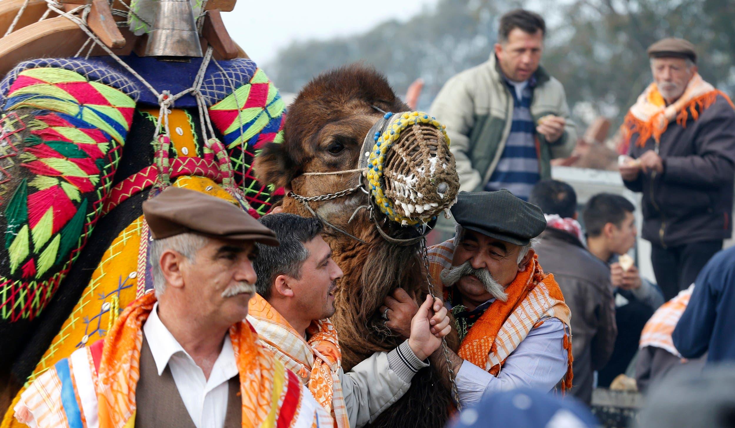 Camel wrestling festival in Turkey