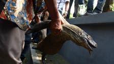 Komodo dragon dies at Indonesia's 'death zoo'