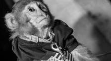 Pictures of monkey on a leash in Dubai club spark outrage