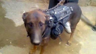 """طالبان تأسر كلباً برتبة """"عقيد"""" في معركة عنيفة"""