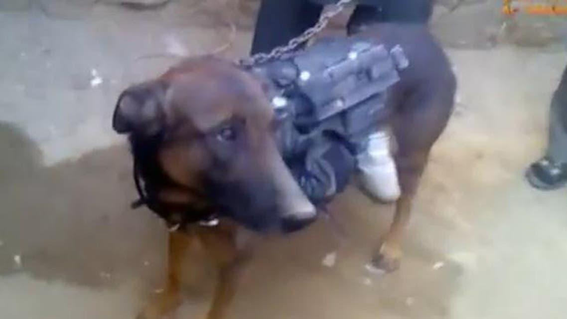 dog NATO