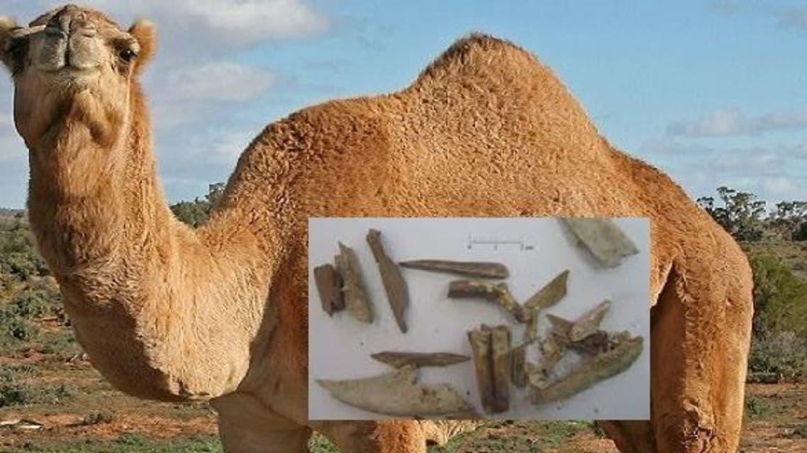 بعض العظام التي تم العثور عليها في وادي عربة