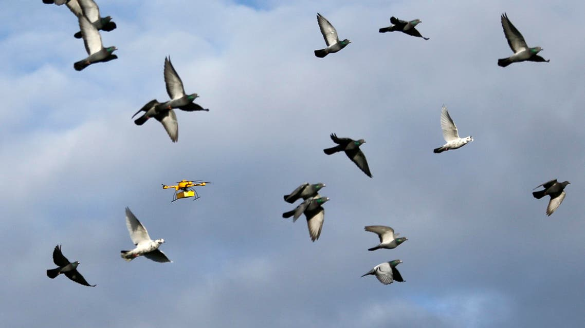 """A flock of pigeons flies with a prototype """"parcelcopter"""" of German postal and logistics group Deutsche Post DHL in Bonn December 9, 2013."""