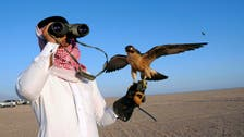 Saudi falconry thrives as sport garners fans