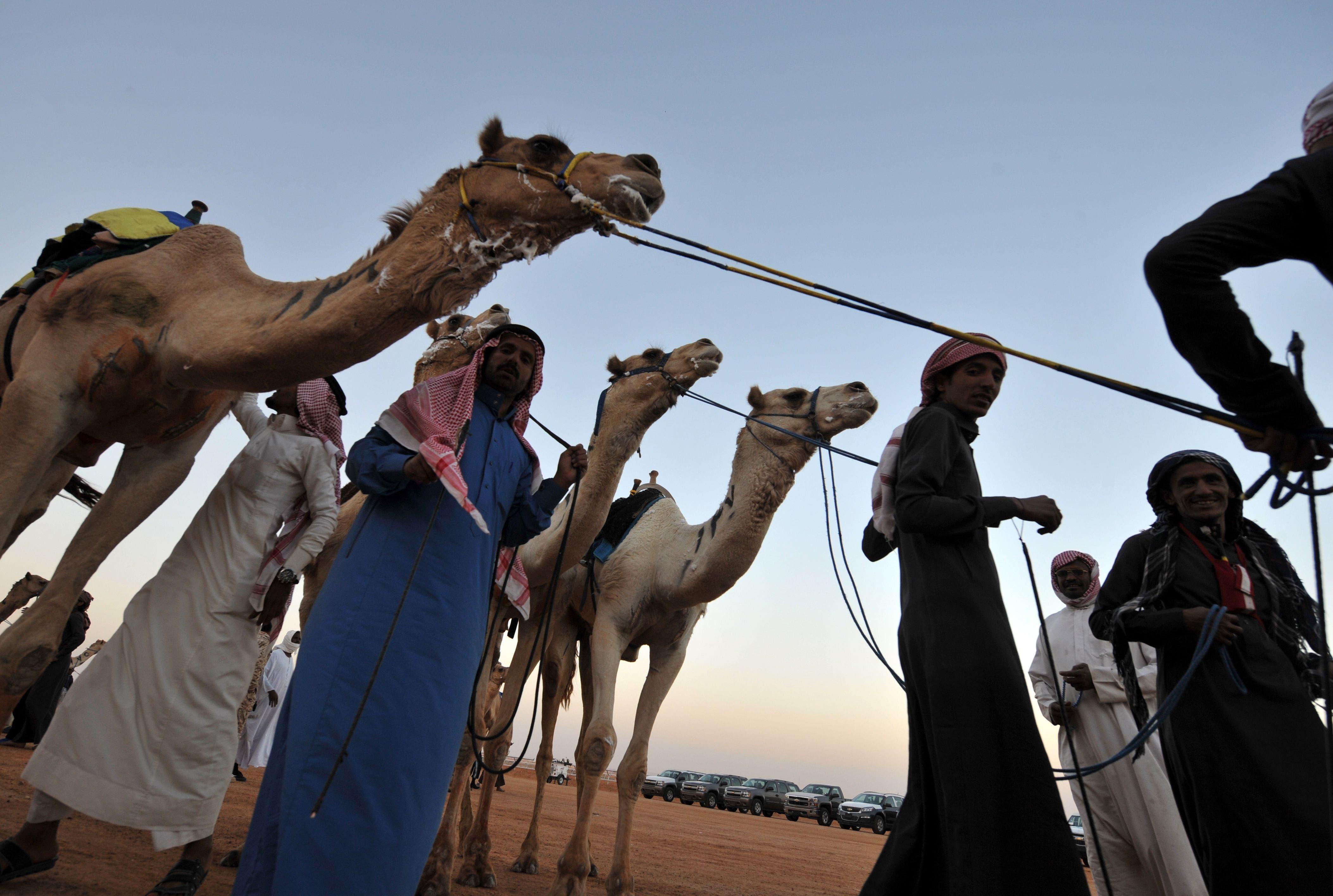 Riyadh Camel Race