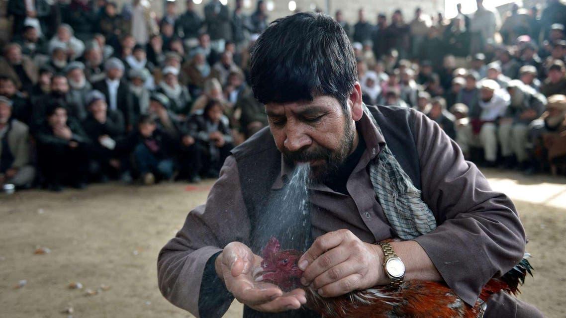 Cockfighting in Kabul