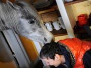 ألمانية تستضيف حصانها العربي في منزلها