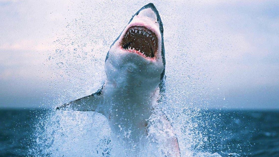 Shark سمك القرش