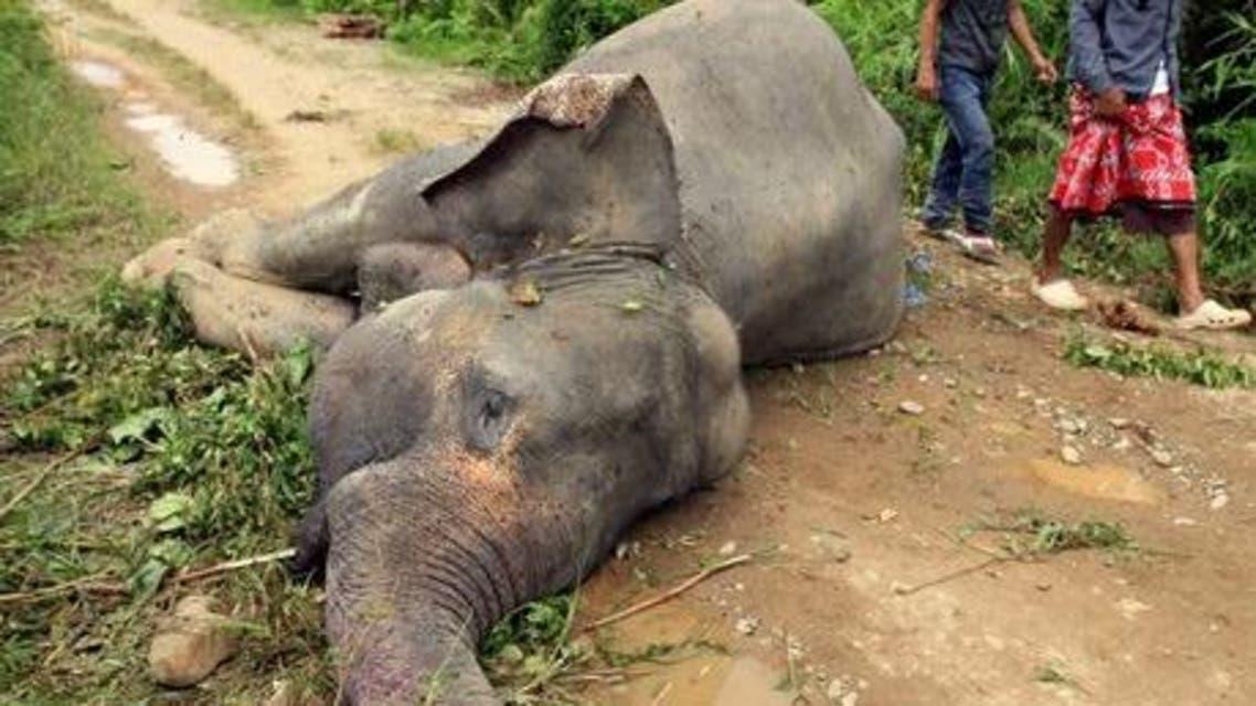 فيل ميت