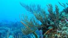 3 آلاف غطاس يشاركون في عملية تنظيف لقاع البحر الأحمر