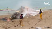 Whale found dead on Kuwaiti beach