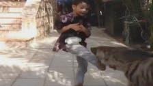 طفل سعودي يتصدى لهجمات ضبع مفترس