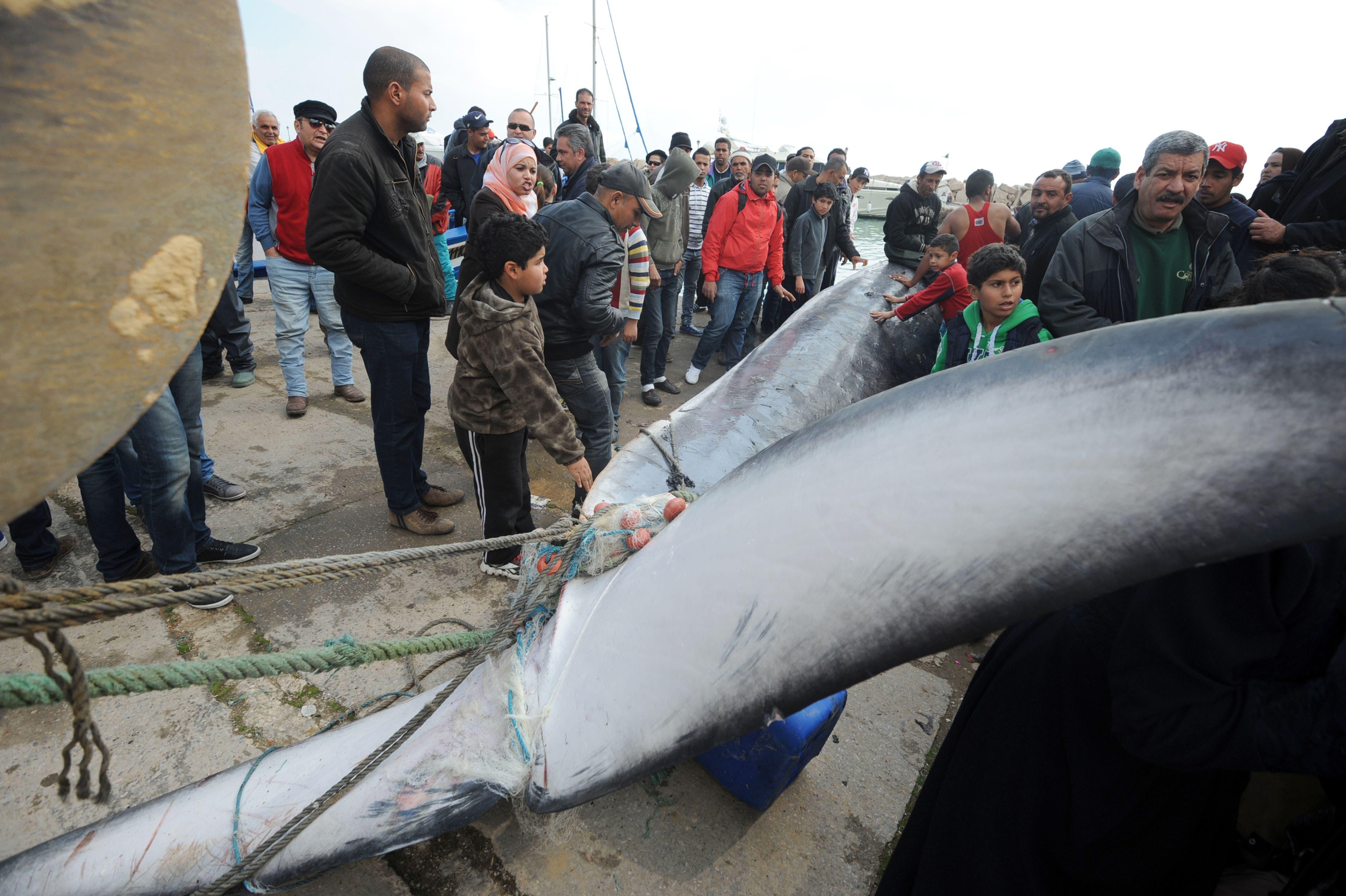 حوت تونس