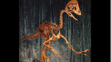 U.S. archaeologists unearth 'chicken from hell'