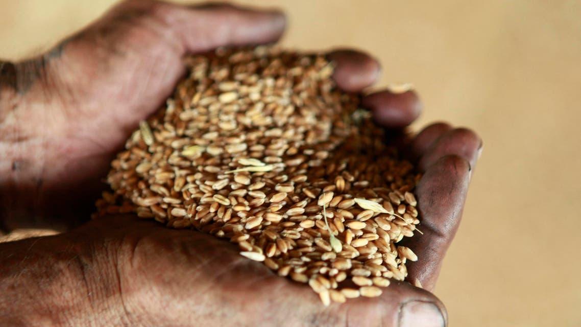 wheat business