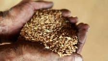 Egypt allocates $1bn for local wheat purchase