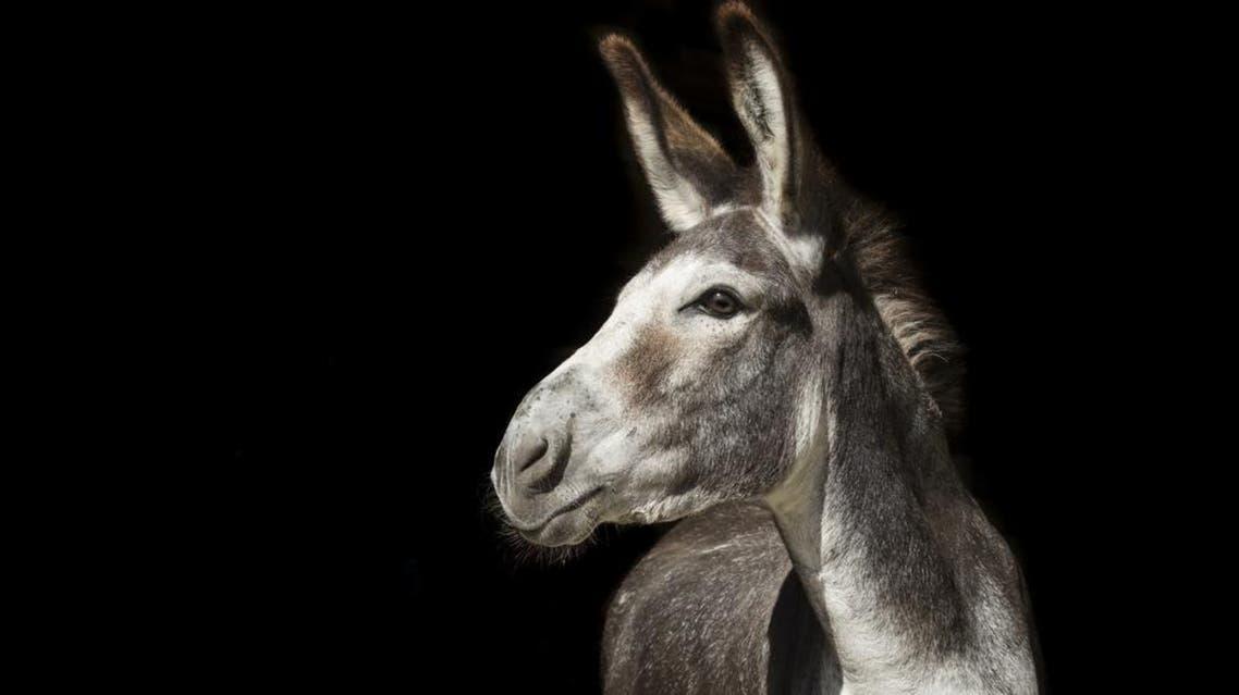 donkey shutterstock