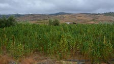 حزب معارض يدعو برلمان المغرب للعفو عن مزارعي القنب