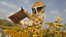 Gaza enjoys best honey harvest in a decade