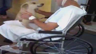 بالفيديو: كلب ينتظر صديقه 8 أيام على باب المستشفى